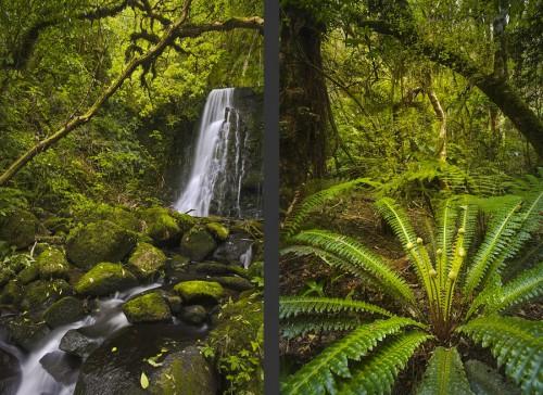 Matai Falls und Regenwald in den Catlins